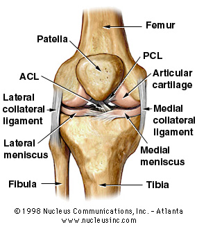 Knee3c_medium