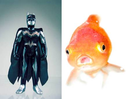 Batfish_medium
