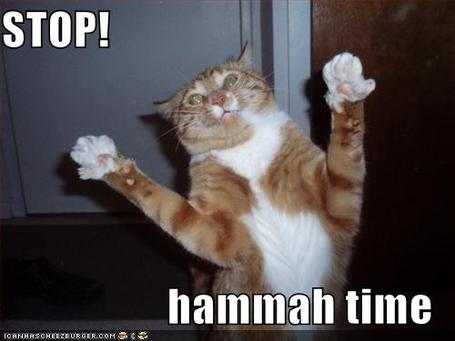 Funny-pictures-mc-hammer-cat_medium