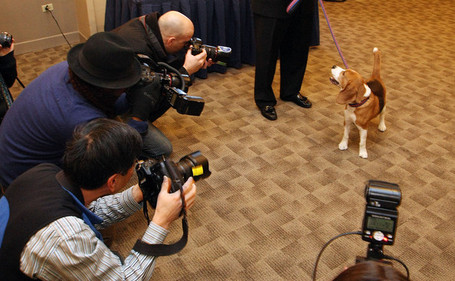 Westminster_dog_show_pre_event_press_conference_ujpibnxnxtbl_medium