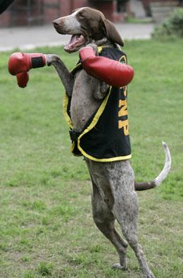 Self-boxing-dog-boxing-260_medium