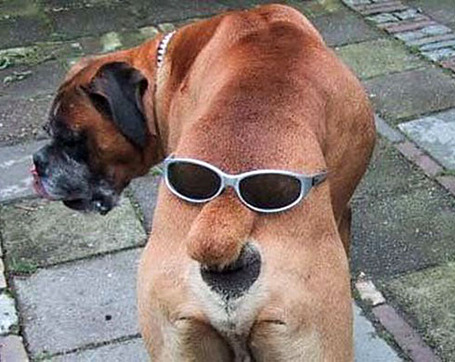 Stylish-dog-ass_medium