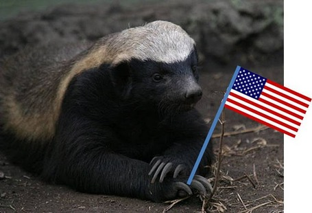 Patriotic_252520badger_medium