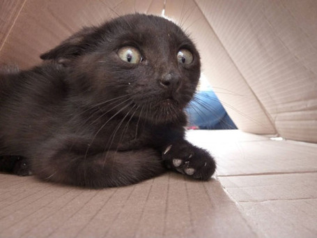 Funny-black-cat-scared-face-big-eyes_medium