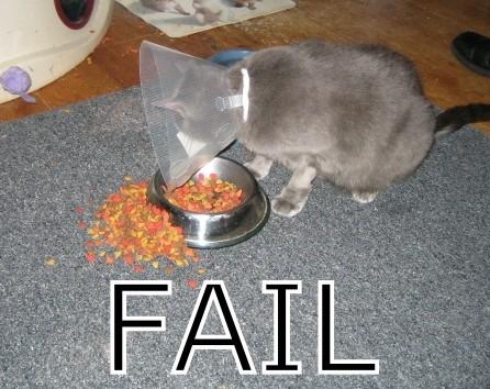 Cat_fail-14136_medium
