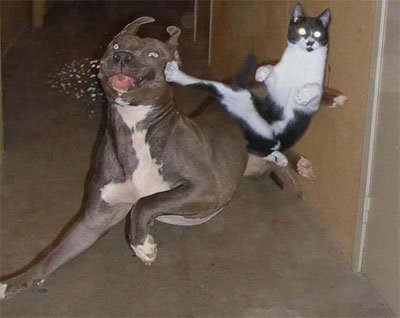 Karate-kitty_medium