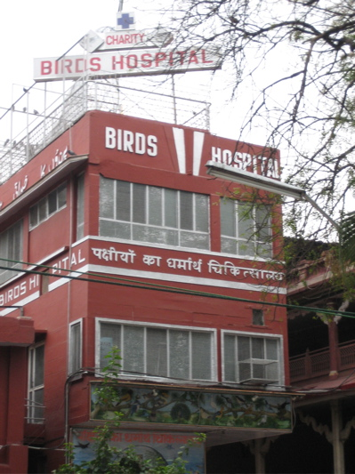 Bird-2520hospital_medium
