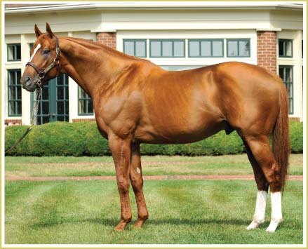 Stallion-curlin_medium