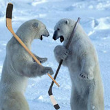 Polar_bears_hockey