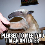 Pleased-to-meet-you-im-an-anteater