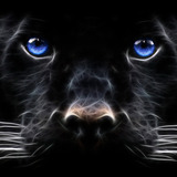 Black_panther__big_cat