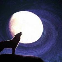 Howling-wolves-night-sky