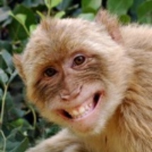 Monkey_grin_avatar