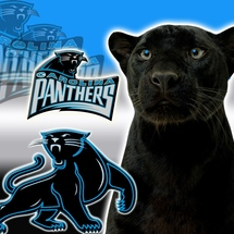 Carolina-panthers-logo-1-7ne6igzun0-1024x768