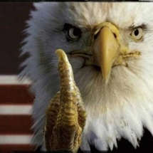 Eagle_middle_finger