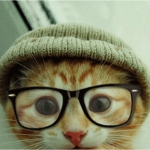 Hipster-cat-kitty-wearing-glasses